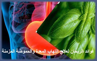 فوائد الريحان لعلاج التهاب المعدة والحموضة المزمنة مع د أحمد ألو النصر Benefits Of Basil Basil Treatment