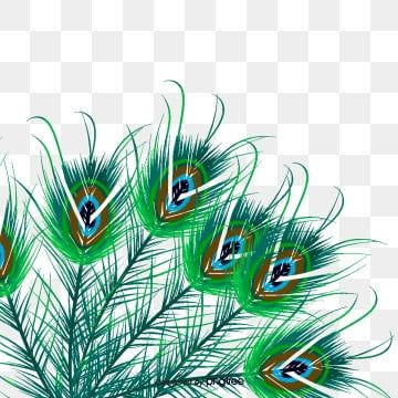 Wispy Peacock Feathers Peacock Peacock Feather Feather Png Transparent Clipart Image And Psd File For Free Download Feather Background Clip Art Free Frames