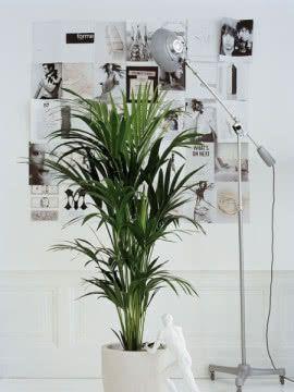 Posts About Fatshedera Lizei On Kwiaty Doniczkowe House Plants Plants Garden
