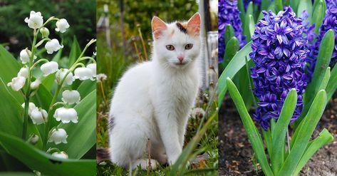Ces 10 Plantes Qui Sont Toxiques Pour Votre Chat Avec Images