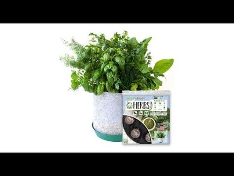 SeedSheets | The Easiest & Fastest Way To Grow An Herb Garden