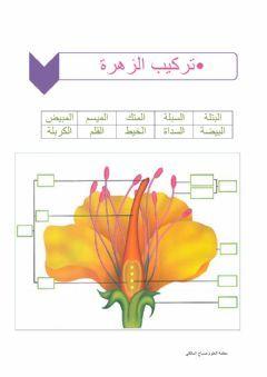 أجزاء تركيب الزهرة في النباتات Language Arabic Grade Level خامس ابتدائي School Subject علوم Main In 2021 Islamic Kids Activities Islam For Kids Activities For Kids