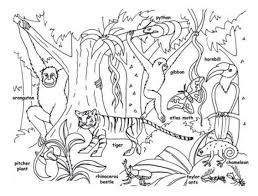 Clipart Black And White Rainforest بحث Google Rainforest Animals Animal Coloring Pages Insect Coloring Pages
