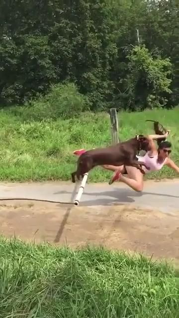 At least the dog made it 😂😂 #cute#adorable#lol#funny#haha#happy#smile#dog#dogs#puppies#puppy#jump#hilarious#cute dogs#cute dog#cute animals#wipeout#falling#fall