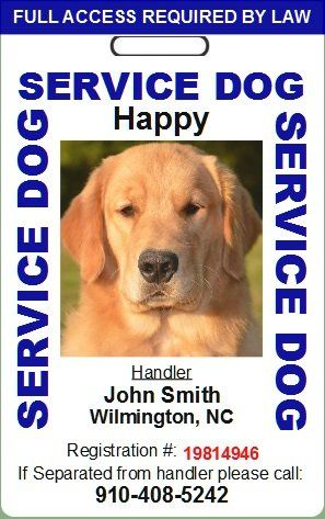 Custom Service Dog Id Card Blue Be Sure To Check Out This