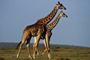 #animals #wildanimals #wildlife #wallpapers #freewallpapers #freebies