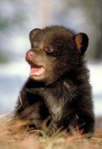 Cute cub - WRI file photo