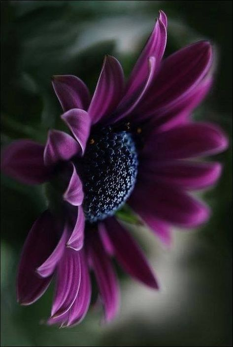 25+ Most Beautiful Purple Flowers with Pictures