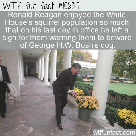 WTF Facts : funny, interesting & weird facts  WTF Fun Fact - Reagan's Squirrely Advice  #wtf #funfact #wtffunfact 10637 #Animals #beware #dog #funnyfacts #GeorgeHWBush #People #randomfact #randomfacts #randomfunnyfact #ronaldreagan #sign #squirrel #warning #whitehouse #wtffunfact