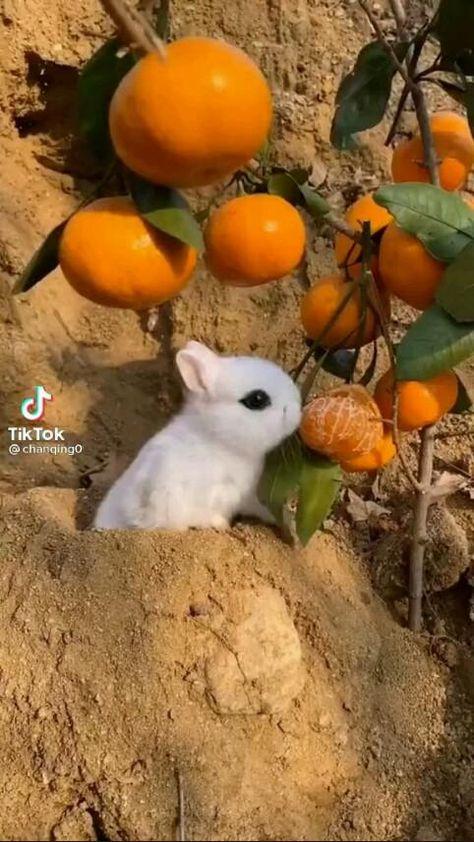 cute little bunny eating orange  #bunny #pet #cute