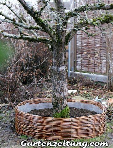 Weiden Selber Flechten Baumrondell Baum Mit Weide Umflechten Hochbeet Pflanzen Beetumwandungen Und Kreative Garten Ideen