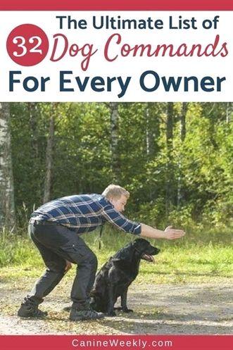 Dog Training Book For Kids Dog Training 06066 Dog Training