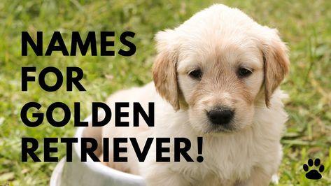 Golden Retriever Names 40 Best Ideas Names Golden