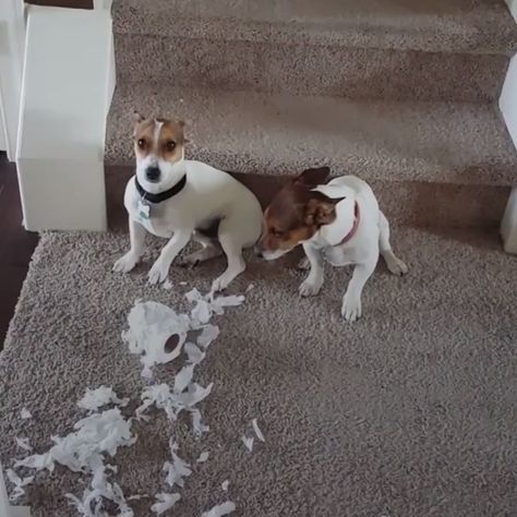 Who did this? #dogs #doglovers #funnydogs #lovelyanimalsworld