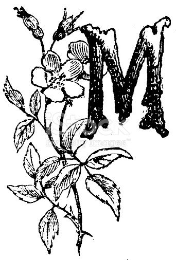 Floral Watercolor Alphabet Monogram Initial Letter M Design With Hand Drawn Peony Flower Floral Watercolor Watercolor Monogram Floral Letters