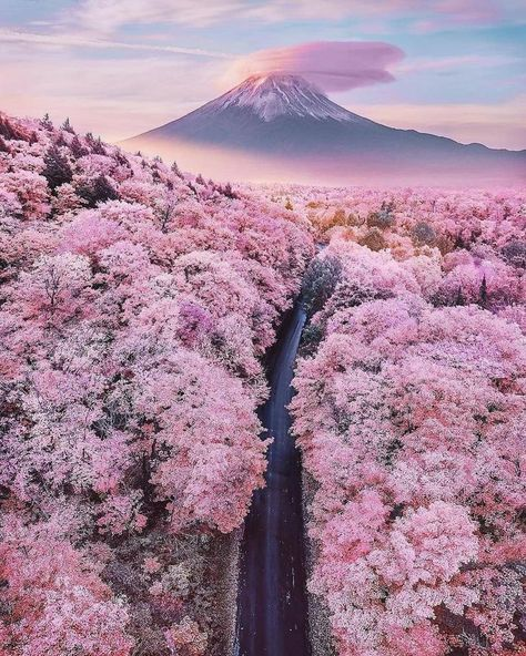 Truly Astounding Places To Visit In Japan Mt Fuji overlooking a sea of blossom trees - Japan - 15 Truly Astounding Places To Visit In Japan.Mt Fuji overlooking a sea of blossom trees - Japan - 15 Truly Astounding Places To Visit In Japan. Cherry Blossom Japan, Cherry Blossom Season, Japanese Cherry Blossoms, Nature Aesthetic, Travel Aesthetic, Aesthetic Japan, Natur Wallpaper, Wallpaper Rosa, Monte Fuji