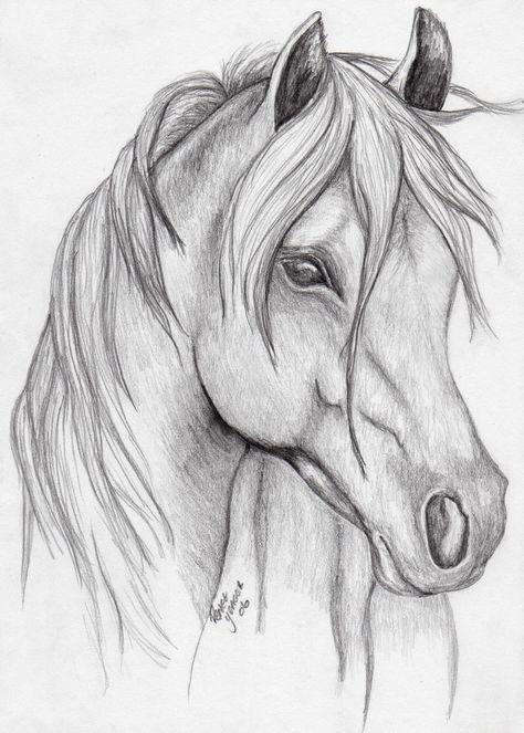 Realistic Animal Drawings, Pencil Drawings Of Animals, Horse Drawings, Sketches Of Horses, Pencil Sketches Of Animals, Horse Pencil Drawing, Simple Horse Drawing, Lion Face Drawing, Rabbit Drawing