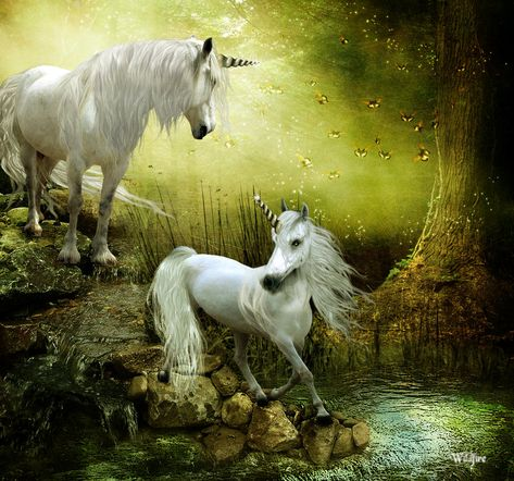 ✯ Out of a Fairy Tale .:☆:. By *Wildfire2003 ✯ Unicorns.