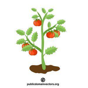 Tomato Plant Vector Clip Art Publicdomain Vectorgraphics Freevectors Illustrator Plant Clips Floral Vector Free Clip Art
