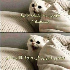 ضحك حتى البكاء ضحك جزائري ضحك حتى البول ضحك معنى ضحك اطفال فوائد الضحك ضحك Meaning الضحك في المنام نكت قصيرة Fun Quotes Funny Funny Arabic Quotes Funny Phrases
