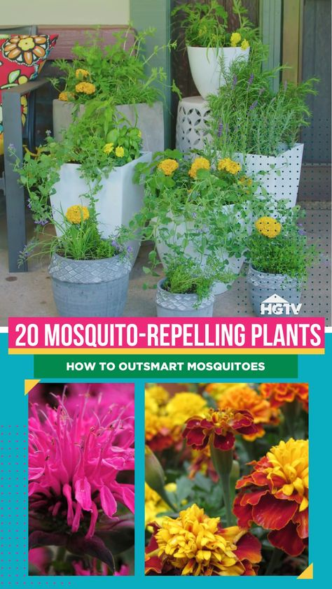 Looking for a way to rid your garden and outdoor space of mosquitoes without using chemical mosquito repellents or a bug zapper? 🦟 Outsmart mosquitoes by using plants that repel or confuse them!