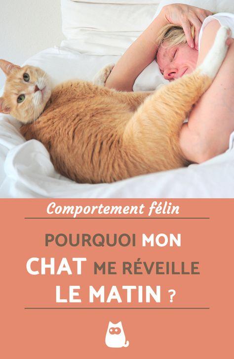Si voulez tout savoir sur le comportement félin et plus particulièrement pourquoi votre chat vous réveille quasiment tous les matins en venant vous embêter dans le lit, alors cliquez sur ce lien où vous découvrirez la réponse !   #chatnoir #cat #catsofinstagram #animauxdecompagnie #photo #drole #funny
