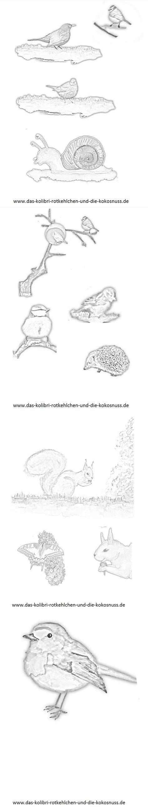"""ausmalbilder zum kinderbuch """"das kolibrirotkehlchen und"""