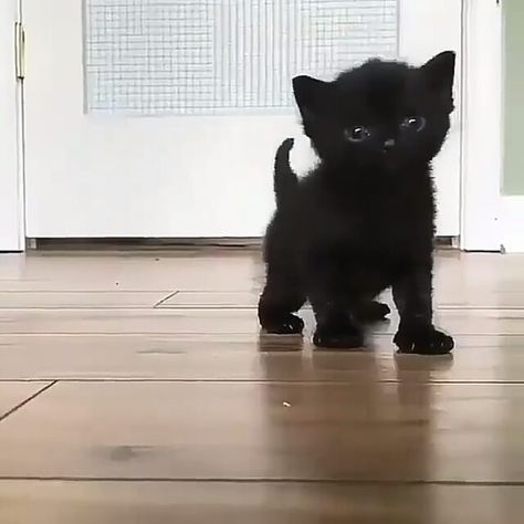 """39.2k Likes, 783 Comments - Sweet Cats Of Instagram (@catsofweek) on Instagram: """"Black kittens are not bad luck! 😍😻 💙 Check us on YouTube 👆👆💞😸 Video by: @raleighkittens…"""""""