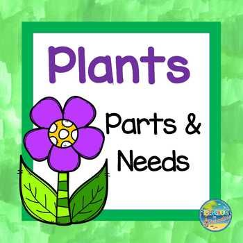 Vocabulary Word Cards Plant Life Cycle Vocabulary Words Life Cycles Vocabulary