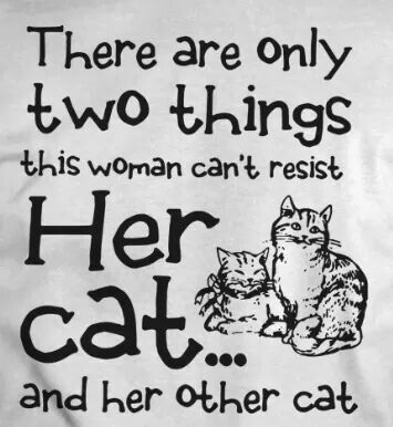 Pin By Cat Lovers Only Com On My Inner Crazy Cat Lady Cat Lady Crazy Cats Cat Quotes