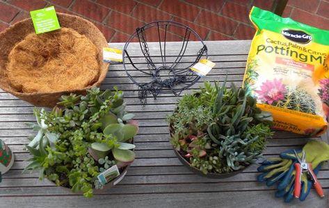 Plantes Grasses En Boule A Suspendre Idee De Deco Jardin A
