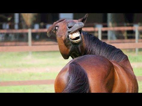 ???? Funniest Animals ????