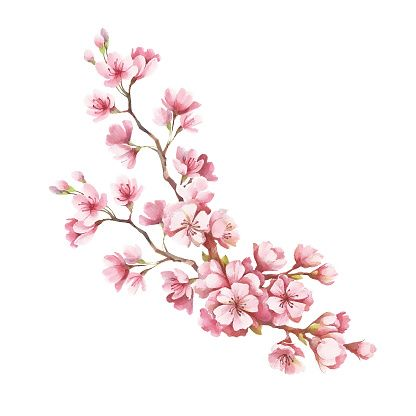Branch Of Cherry Blossoms Hand Draw Watercolor Illustration Cherry Blossom Drawing Cherry Blossom Art Cherry Blossom Watercolor
