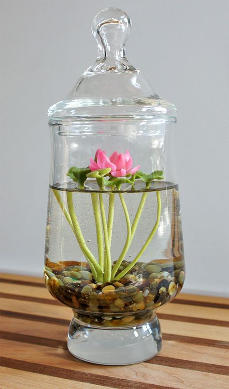 Mini Lotus Water Lily Terrarium in Recycled Glass A tiny 6980660331 b Indoor Water Garden, Garden Plants, Indoor Plants, House Plants, Indoor Flowers, Hydroponic Gardening, Container Gardening, Miniature Terrarium, Lotus Plant