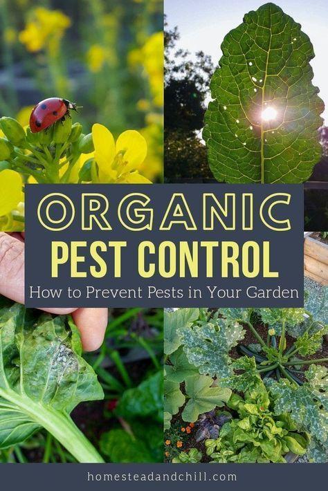 Organic Garden Pest Prevention