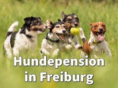 Hundepension In Freiburg In 2020 Hundepension Hunde Hund Gesucht