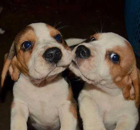 Pin Auf Dogs Dog Training Dog Food