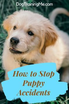 Are You Dealing With A Puppy Who Poops And Pees Inside The House