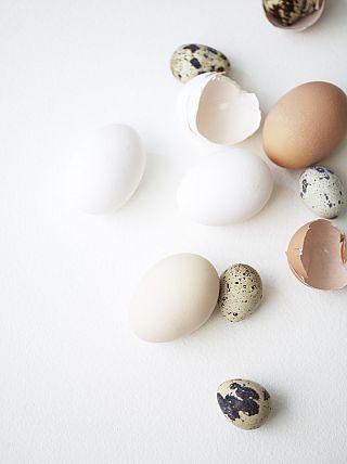 Egg shell colors.