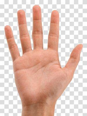 Hand Arecaceae Icon Hands Hand Transparent Background Png Clipart Clip Art Hand Emoji Hand Sticker