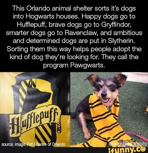 This Orlando animal shelter sorts it's dogs into Hogwarts houses. Happy dogs 90 to Hufflepuff, brave dogs go to Gryffindon smarter dogs 90 to Ravenclaw, and ambitious and determined dogs are put in Sly'therin. Sorting them this way helps people adopt the kind of dog they're looking for. They call ... #harrypotter #movies #this #orlando #animal #shelter #sorts #dogs #hogwarts #houses #happy #hufepuff #brave #go #gryfndon #smarter #ravenclaw #ambitious #determined #put #slytherin #sorting #pic