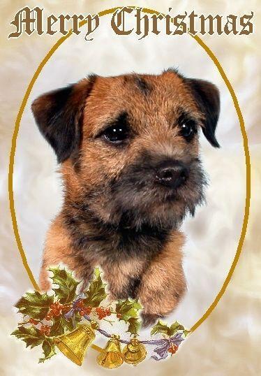 Terrier Ebay Collectables Border Terrier Terrier Dogs Border