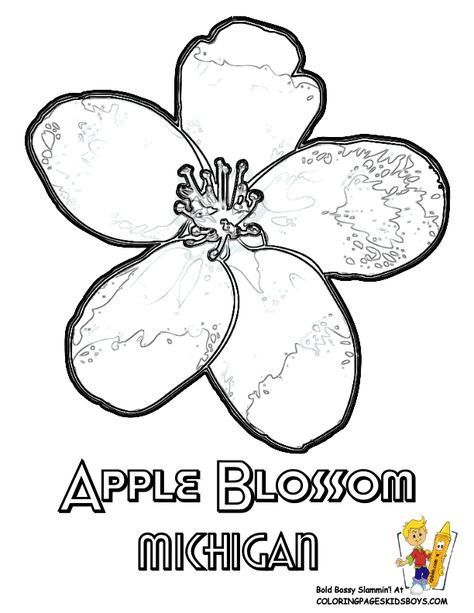States Flower Printables Flag Coloring Pages Flower Printable