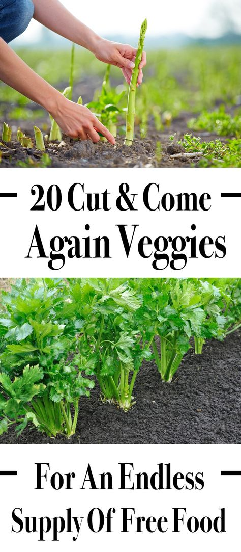 Know the endless supply of free food with these 20 cut and come veggies