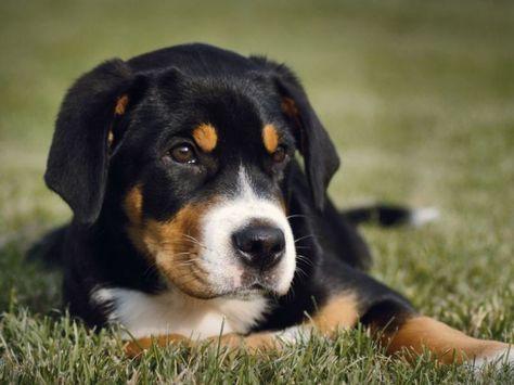 Flohallergie Wie Sie Ihrem Hund Helfen Konnen Hunde Orthopadisches Hundebett Und Hundetransportbox