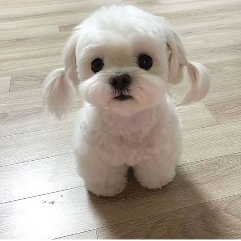 Funny Animal Pictures Of Today's So Cute Baby, Cute Baby Dogs, Super Cute Puppies, Cute Little Puppies, Cute Little Animals, Cute Dogs And Puppies, Cute Funny Animals, Baby Cats, Funny Dogs