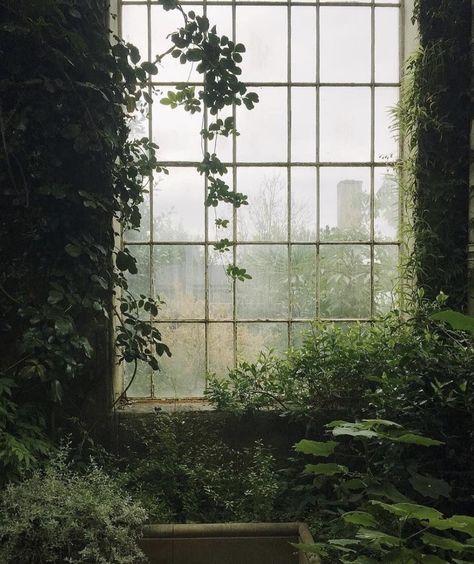 Natur im Innenraum // Fotografie von Haarkon / India & Magnus ( Plant Aesthetic, Nature Aesthetic, Aesthetic Green, Aesthetic Grunge, Aesthetic Vintage, Botanic Gardens Edinburgh, Slytherin Aesthetic, Aesthetic Pictures, Botanical Gardens