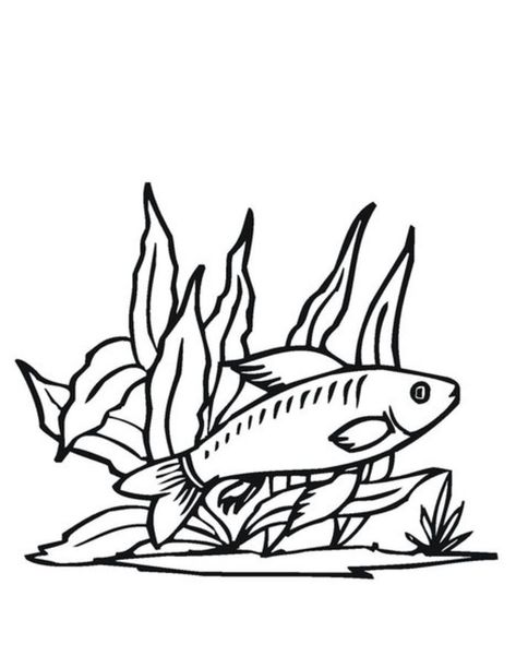 Blaufisch Ausmalbilder Ausmalbilder Blaufisch Ausmalbilder Fische Ausmalbilder Ausmalen