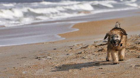 Playas Para Ir Con Tu Mascota álbumes Ocholeguas Elmundo Es Mascotas Playa Animal Doméstico