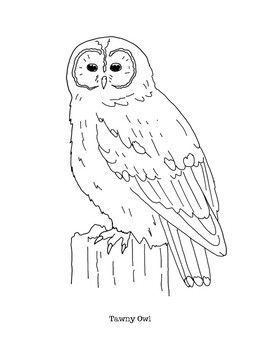 Cute Owl Coloring Page Free Printable Coloring Pages Owl Coloring Pages Animal Coloring Pages Owls Drawing